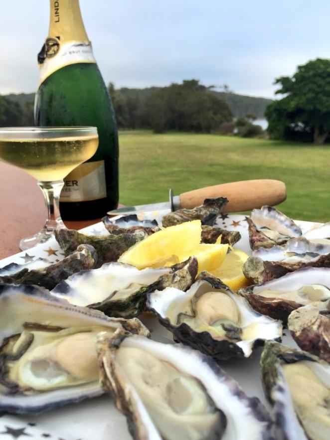 Wapengo rocks oysters